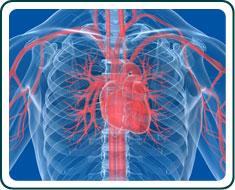 heart disease factors