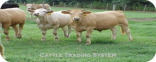 Welcome to cattle trading system information source on cattle trading